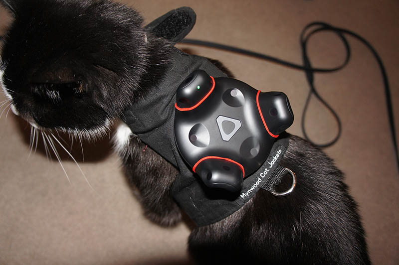 Cat wearing pet tracker for HTC Vive Tracker
